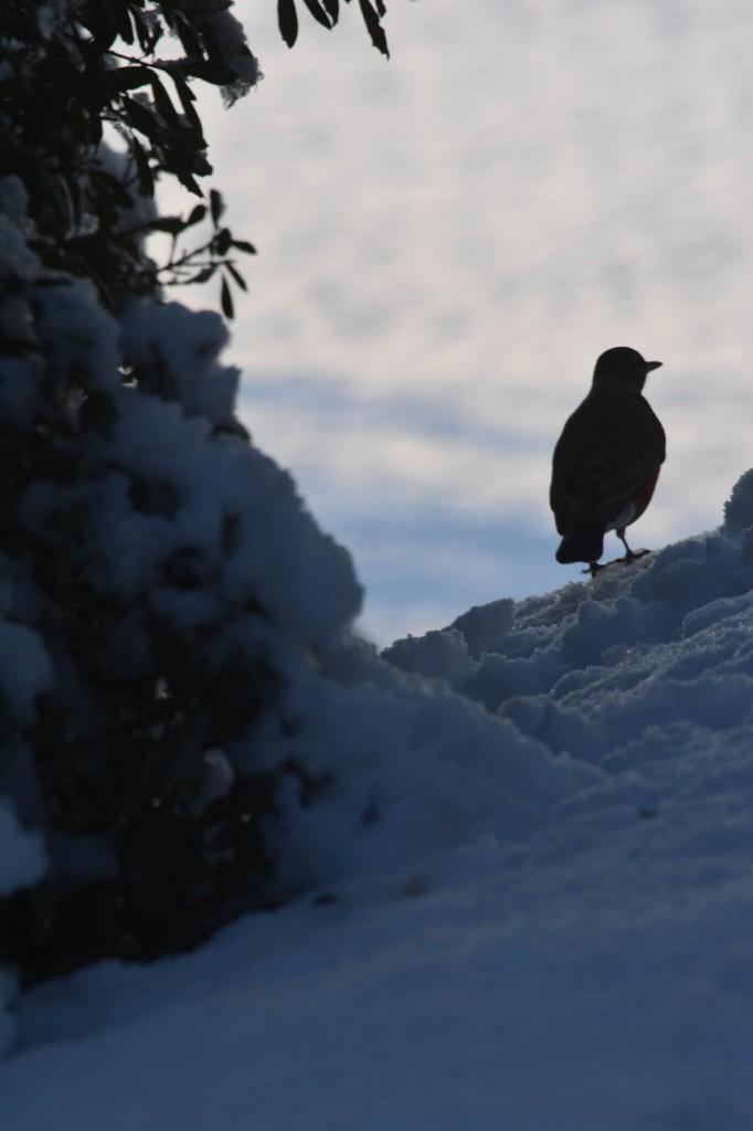09. Bird overlooking Jones Farm_med.0171