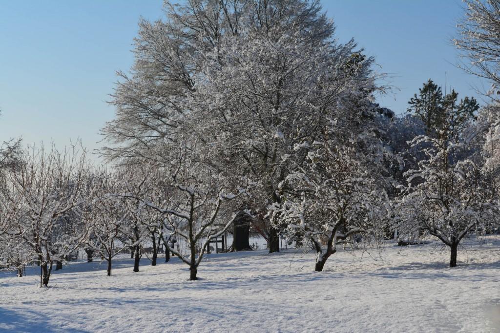10. Jones Valley Snow_med.0200