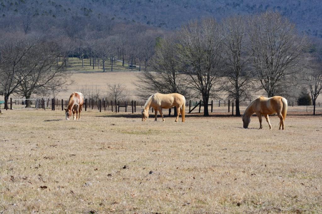 13. Jones Farm from Garth Rd._med.0301