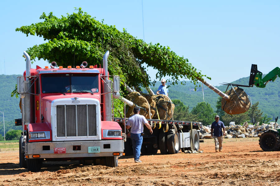 Unloading the Trees at LENDON
