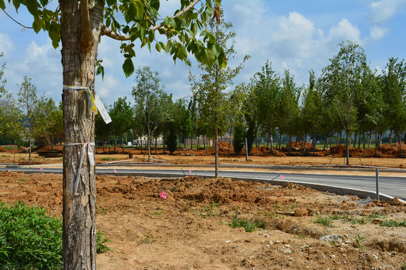 A newly planted tree looks back towards the others from Lendon Park Main