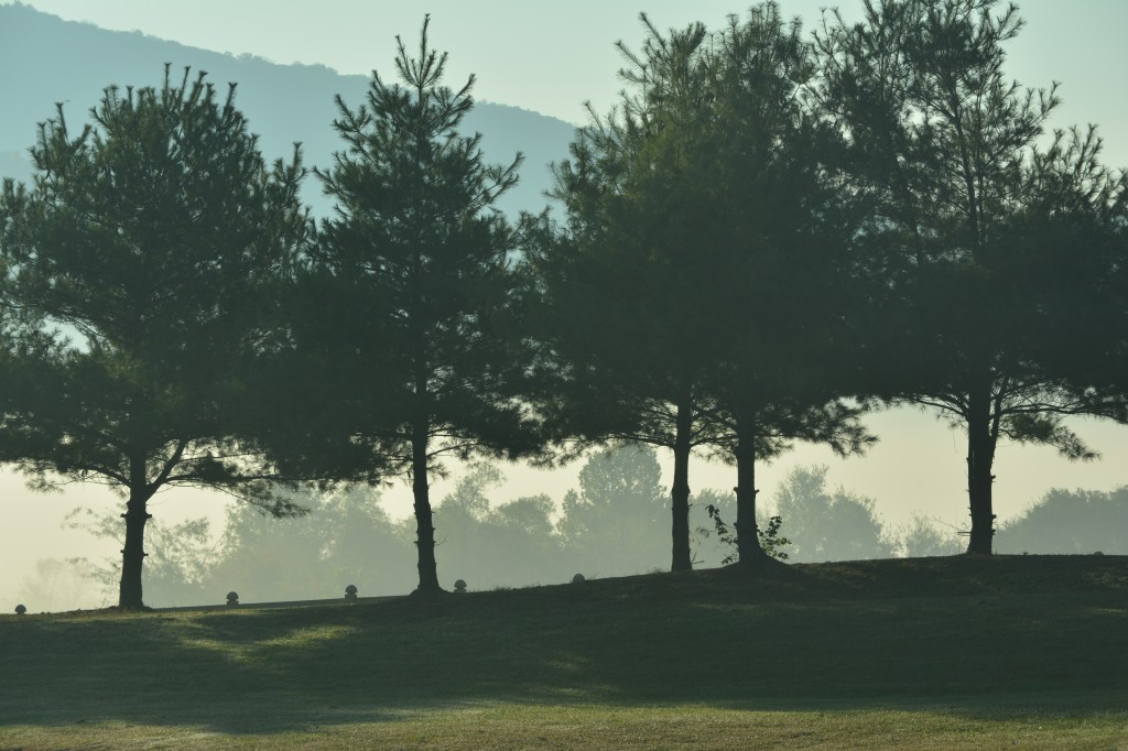 08. A row of trees is masked by morning fog in Jones Valley_0770